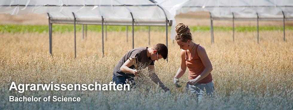Bachelor Agrarwissenschaften